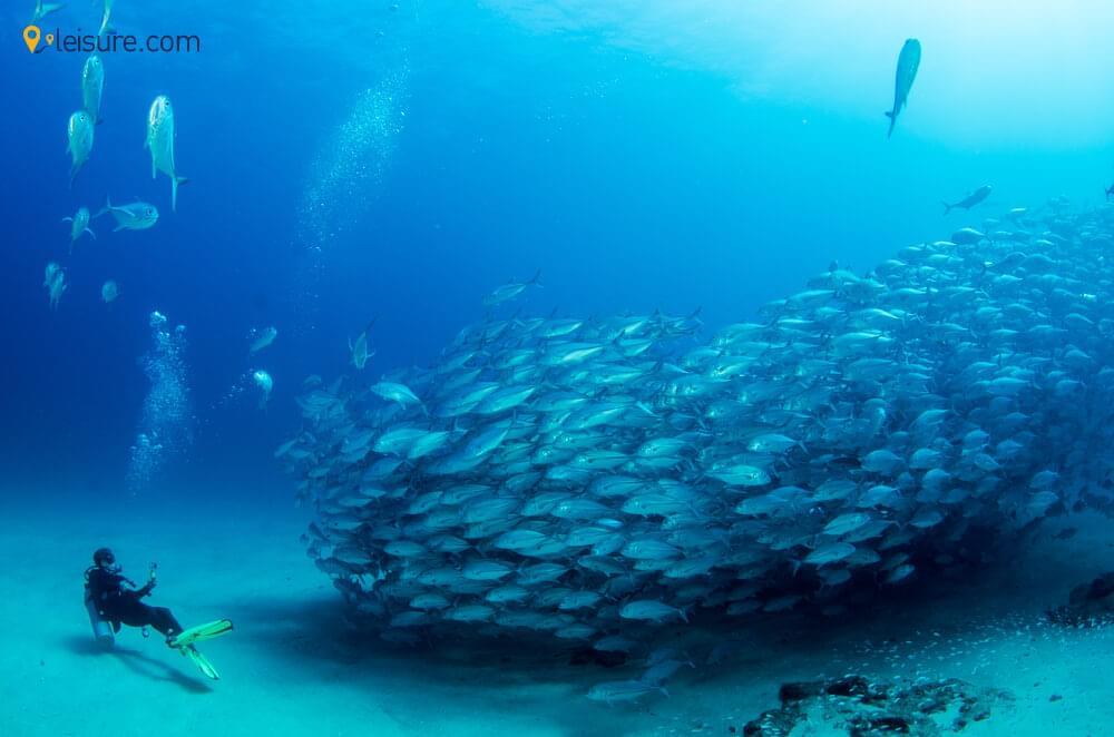 Explore The Coastal Wonders With This Australia Tour Package
