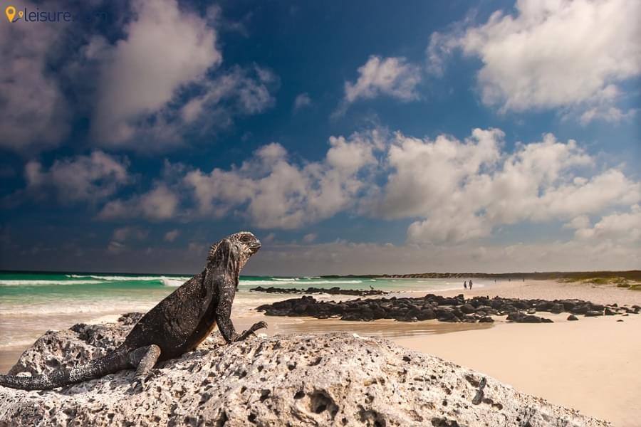 Ecuador & Galapagos Tour