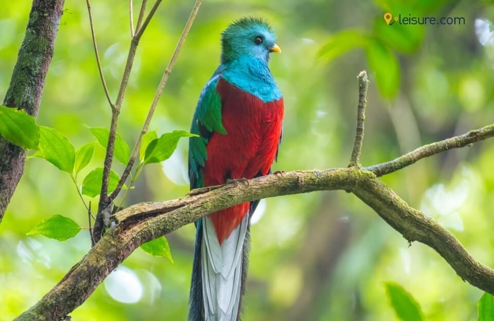 A Memorable Trip To Costa Rica