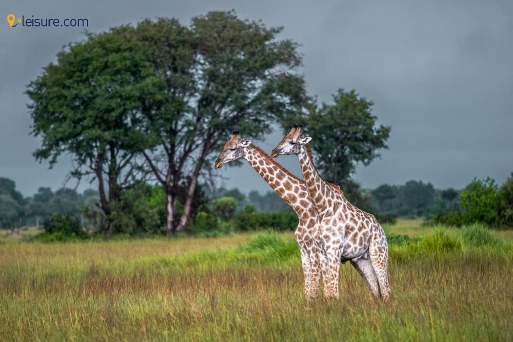 8-Days Zambia Safari