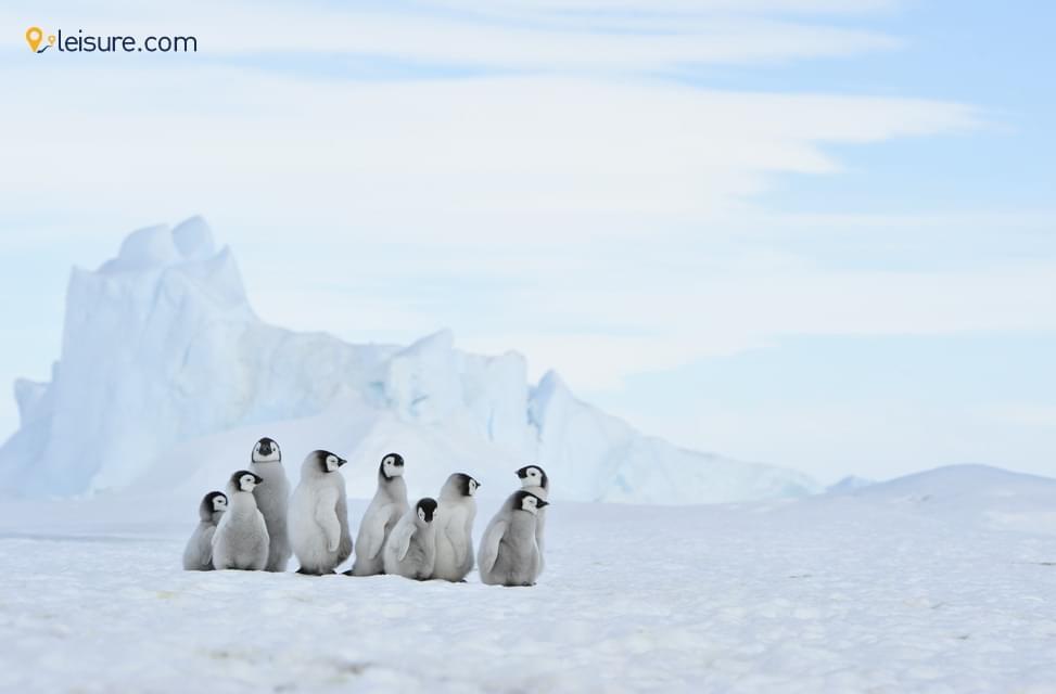 Travel Review: Luxury South America Tour, Chile, Argentina & Antarctica, Buenos Aires, Santiago..