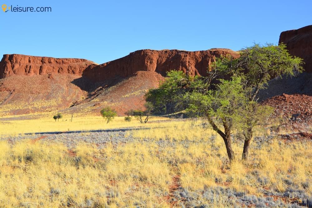 Namibia Safari