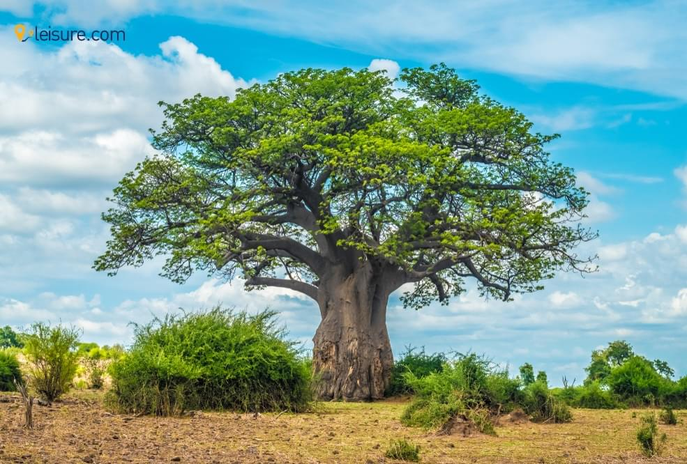 An Incredible Botswana Safari Tour
