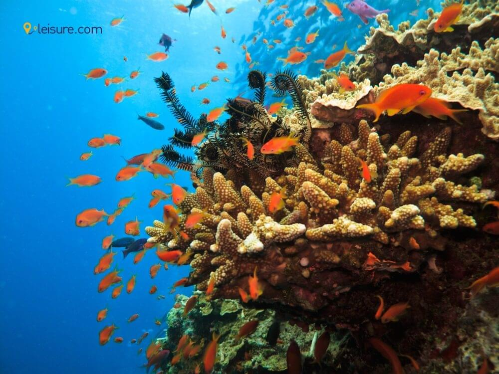 Great Barrier Reef and Sydney