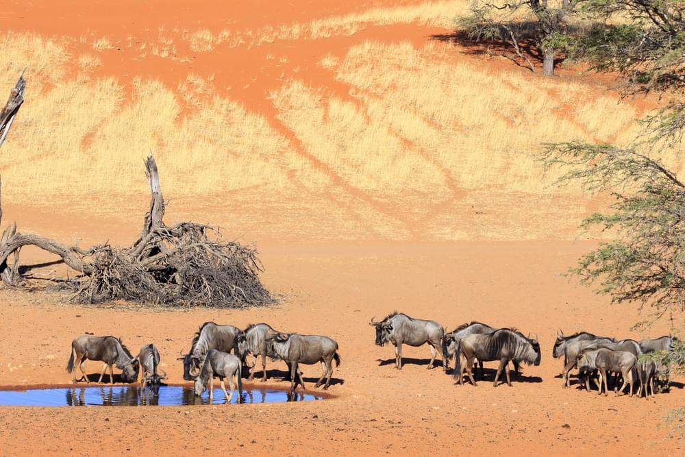 with this Botswana Safari Package
